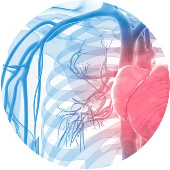 bg-frame-vascular